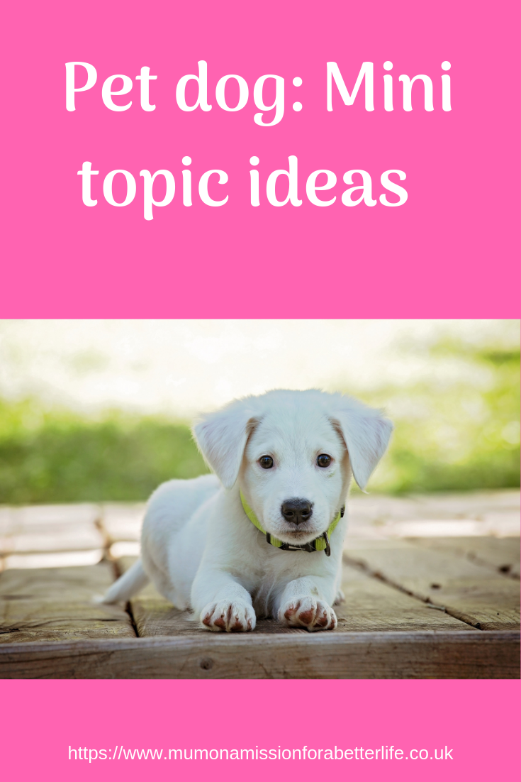 pet dog mini topic ideas for home education