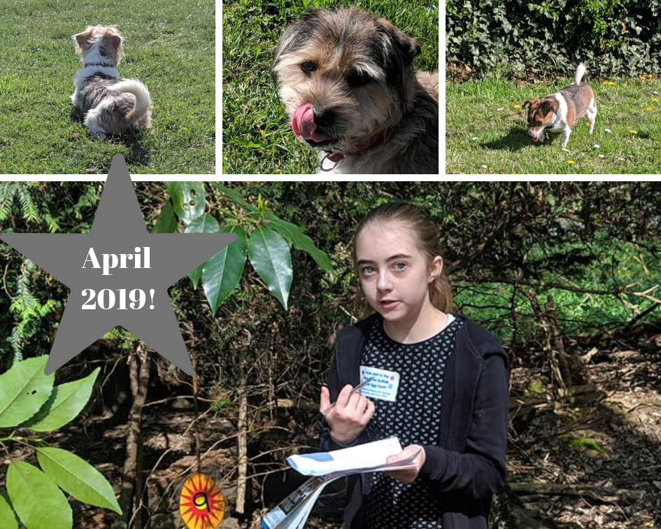 April photographs. Easter egg hunt and three dogs