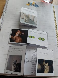Example of notebook work for a cat