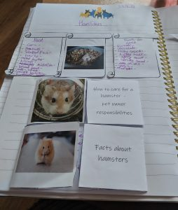 Example of notebook work for studying hamsters as part of a home school topic