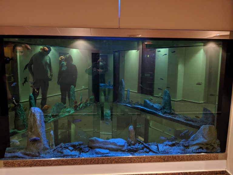 The fishtank in the hotel at the blogging conference