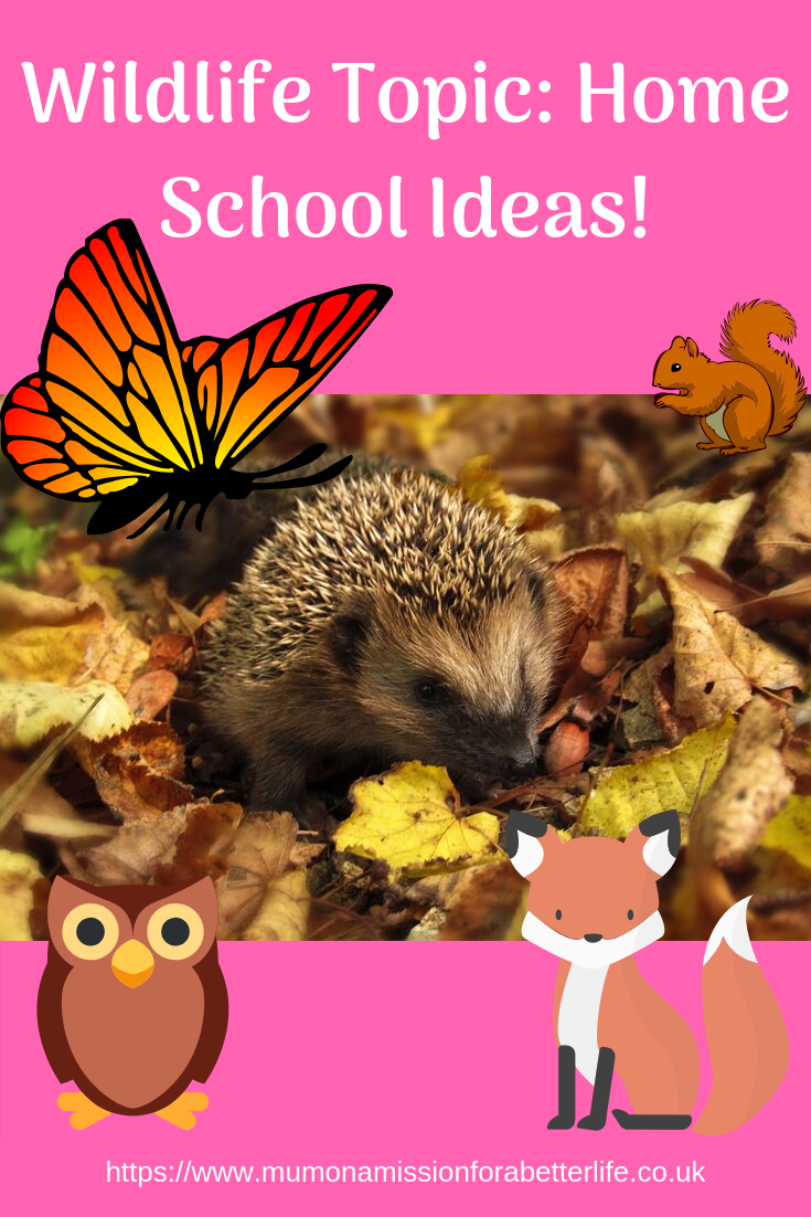 wildlife - hedgehog in the center on top of a pile of leaves. Monarch butterfly, squirrel, owl and fox in cartoon form surrounding the hedgehog.