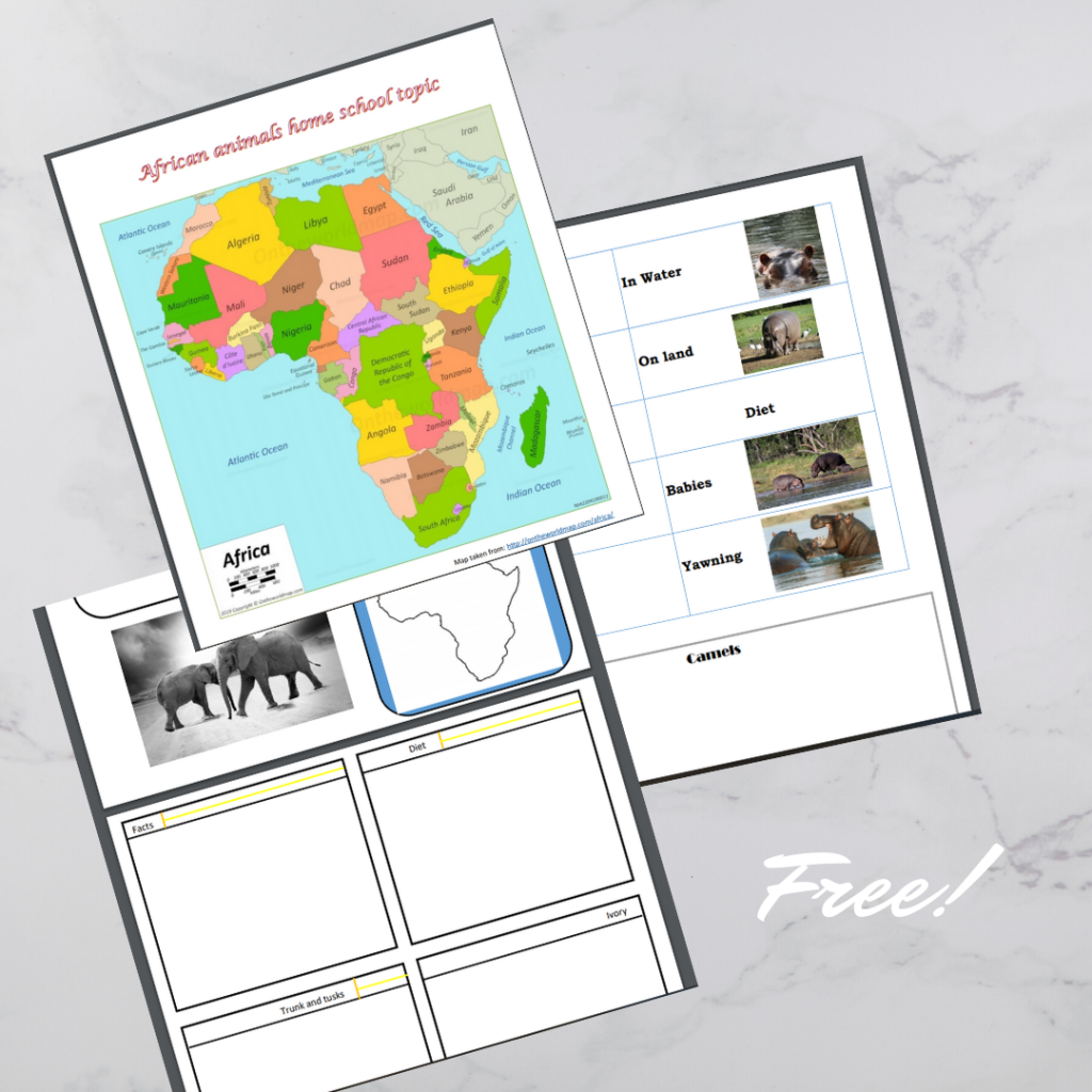 African animals workbook pages