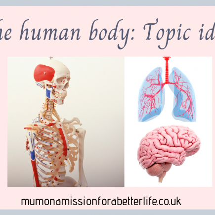 human skeleton, lungs and brain illustrations