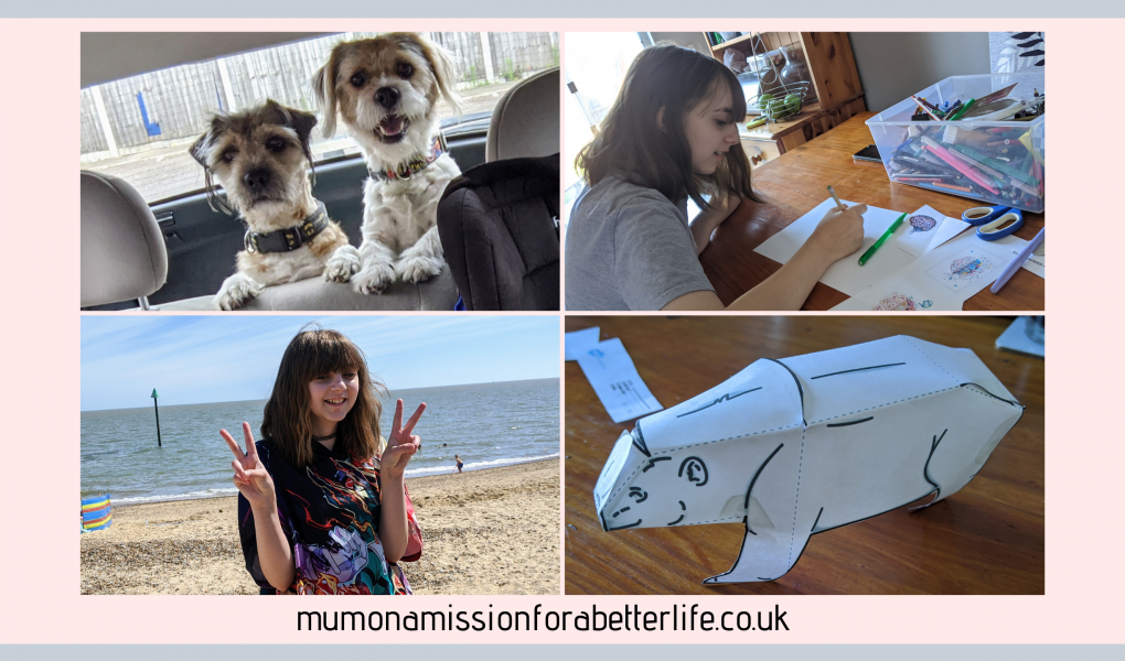 4 images. 1 - two dogs in a car boot looking at the camera from the inside of the car. 2 - Faith doing home school work at the kitchen table. 3 - Faith at the beach with the sand and sea in the background. 4 - a polar bear made from paper.