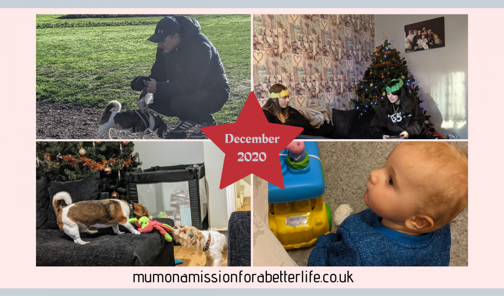 4 images - one: Man kneeling in a park with a jack Russel cross. Two: Two young women sitting on a black sofa wearing Christmas hats with a Christmas tree in the background. Three: Two jack cross dogs playing tug of war in front of a Christmas tree. Four: Close up on baby boy face who is playing with a toy.