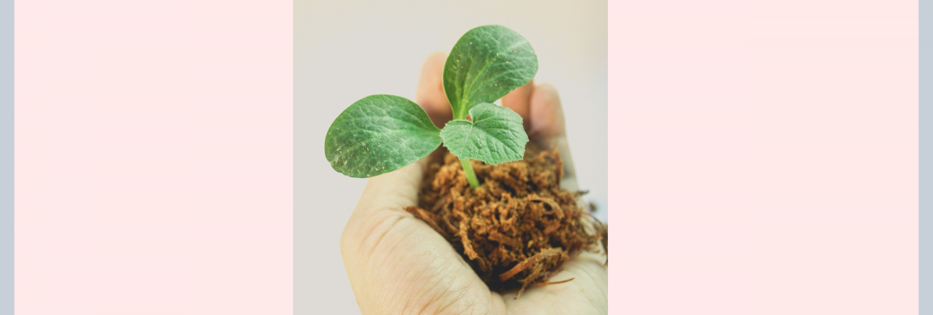 A hand holding a plant in soil representing growing