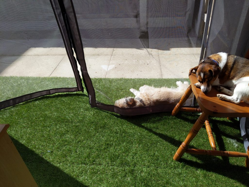 Dogs laying in the sun, one on the grass and one on a wooden chair